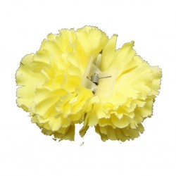 Flor-Clavel doble amarillo.. Sevillana-Cordobesa-Andaluza..